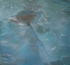 Stingray - Highborne Cay Resort