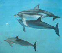 Dolphins Mural