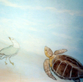 3-2-beach_gull_turtle-copy